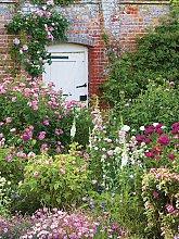 Woodmansterne White Garden Gate Greeting Card