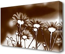 X-Ray Daisys Brown Flowers Canvas Print Wall Art