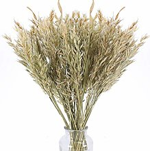 XHXSTORE Dried Flower Bouquets 50Pcs Natural Dried
