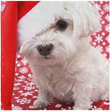 XiangHeFu Washable White Maltese Dog In Christmas