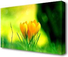 Yellow Crocus Flowers Flowers Canvas Print Wall