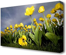 Yellow Daisy Storms Flowers Canvas Print Wall Art