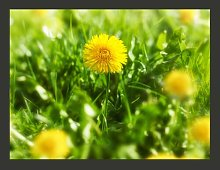 Yellow Flower Field 1.54m x 200cm Wallpaper East