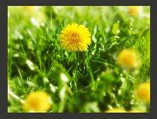 Yellow Flower Field 3.09m x 400cm Wallpaper East