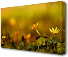 Yellow Flowers In The Golden Sun Flowers Canvas