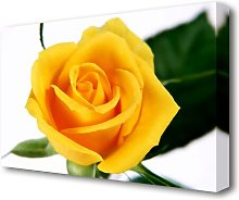 Yellow Rose Flowers Canvas Print Wall Art East