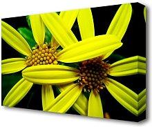 Yellow Star Flowers Flowers Canvas Print Wall Art