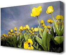 Yellow Tulip Field Storm Flowers Canvas Print Wall