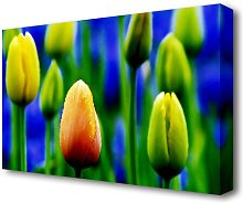 Yellow Tulips In A Blue Field Flowers Canvas Print