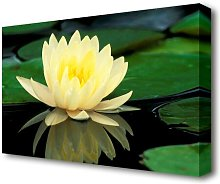 Yellow Water Lily Reflection Flowers Canvas Print