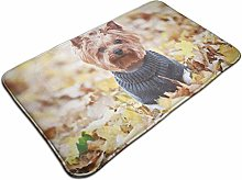 Yorkshire Terrier In A Sweater In Autumn Park Bath