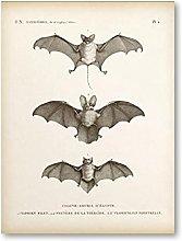 YQQICC Vintage Bat Animal Posters Print Wall Art