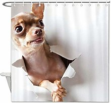 YY-one Fabric Shower Curtain With Hooks, Chihuahua