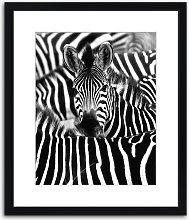 Zebra Camouflage Framed Print & Mount, 97 x 82cm,