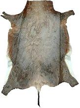 Zerimar African Blesbok Area Rug Natural Premium |