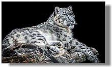 zqyjhkou snow leopard/Print wild leopard poster on