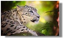zqyjhkou Yellow snow leopard/Print wild leopard