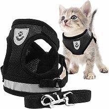 Zqyrlar - Cat Harness, Cat Harness, Cat Harness