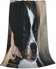 ZVEZVI Cute Black White Jack Russell Chihuahua Mix